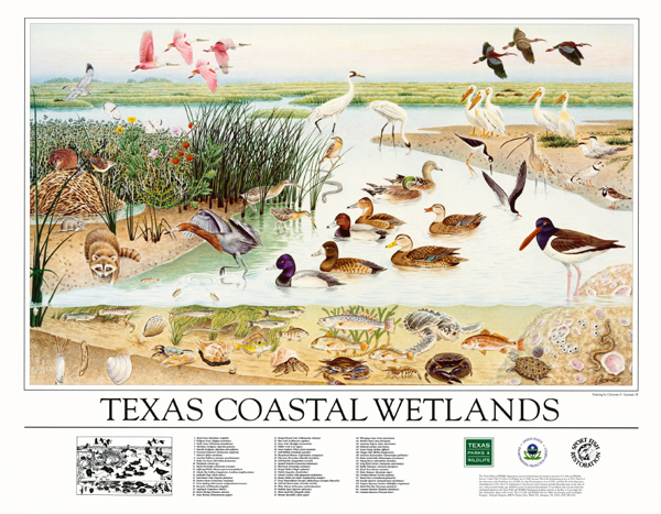 Texas Coastal Wetlands Poster