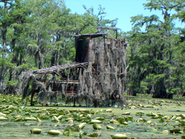 Tpwd carter 39 s chute paddling trail texas paddling trails for Caddo lake fishing