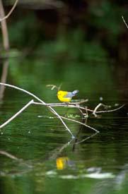 Tpwd haggerty creek paddling trail texas paddling trails for Caddo lake fishing report