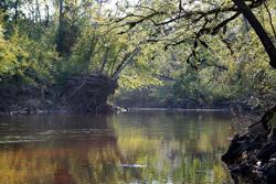 TPWD: Village Creek Paddling Trail | | Texas Paddling Trails