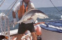blacktip shark caught on longline