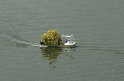 crabber on 