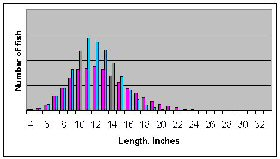 Figure 4b.  Distribution of length with heavy fishing pressure.