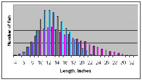 Figure 2b.  Distribution of length with light fishing pressure.