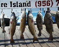harvest of red drum and black drum