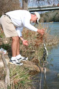 Rainbow trout stocking for Trout fishing in texas