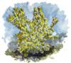 Ivory Bush Coral