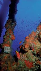 Nearshore reef