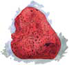 Red Boring Sponge