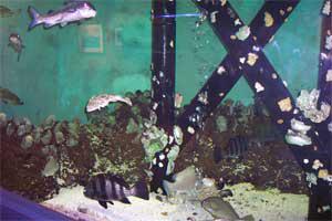 Coastal Bay Aquarium