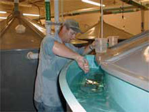 Collecting fish eggs at the hatchery