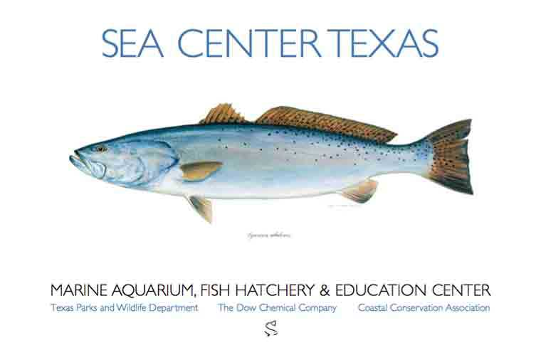 Sea Center Texas Spotted Seatrout Poster By Ben Kocian