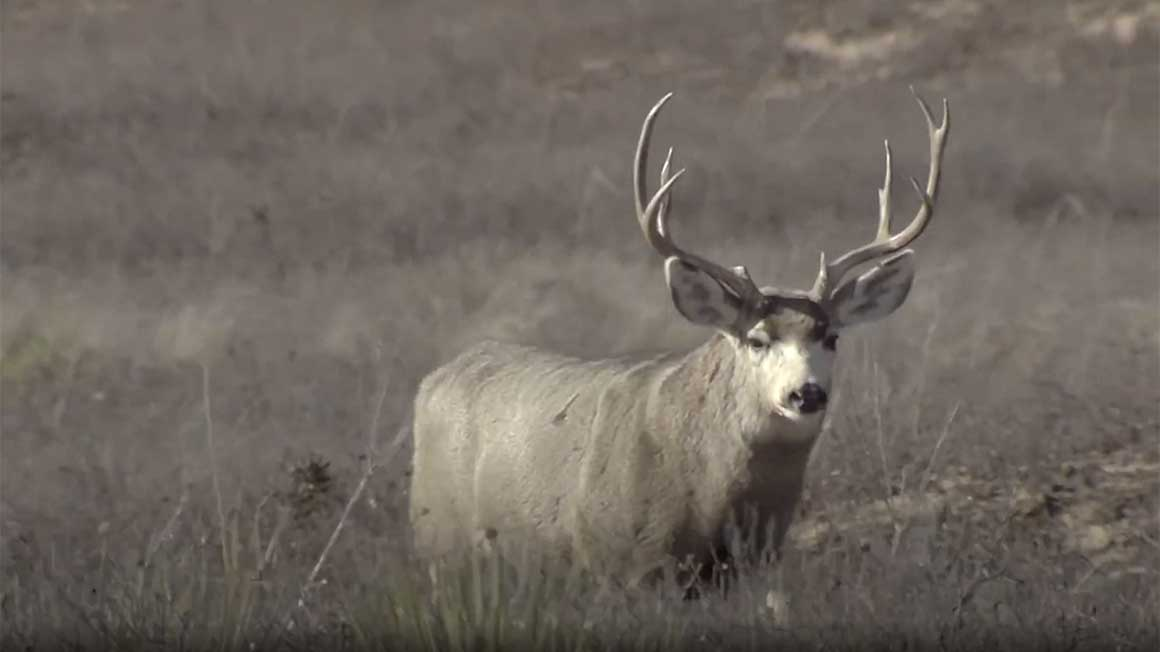 Big Time Texas Hunts Video