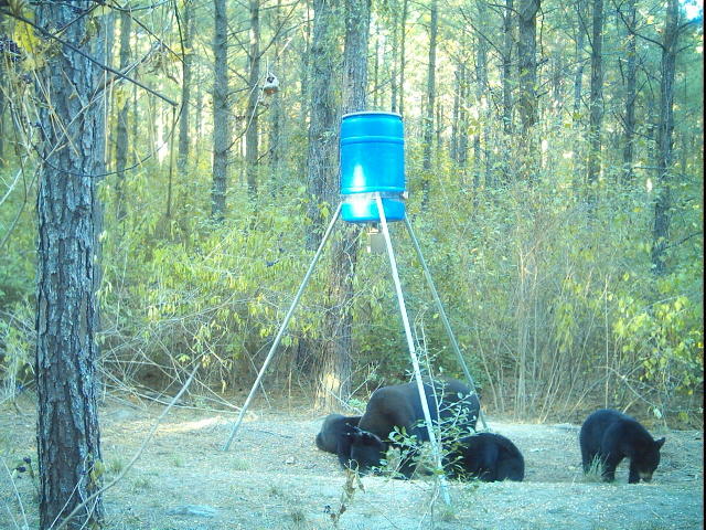 Bear Safety for Hunters in Texas