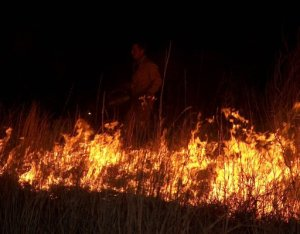 Nighttime prescribed burning at the Gene Howe WMA