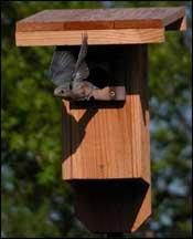 bird house plans for texas