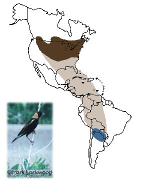 Bobolink - Breeding range includes the northern half of the U.S. east of the Rocky Mountains plus the southern fringes of Canada.  The species migrates over the Gulf of Mexico and through Central America and much of South America.  Its wintering range includes grassland portions of Bolivia, Paraguay, and Chile, but the bulk of the population winters in northern Argentina.