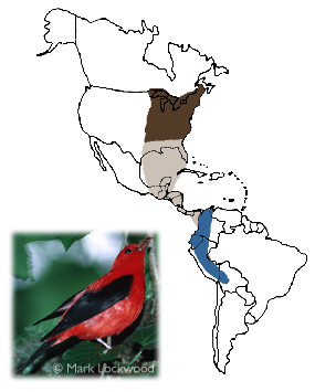 Scarlet Tanager - Breeding range includes the eastern third of the U.S. and the southeastern fringes of Canada.  The species migrates over the Gulf of Mexico and through Central America.  Its wintering range includes the Andes from Colombia south to Bolivia.