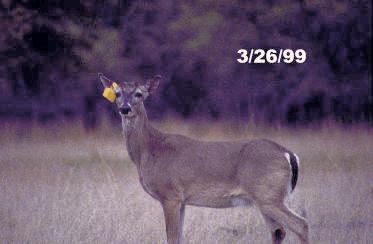 How can I aid in whitetail deer antler growth?