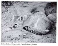 Photograph of the Fox