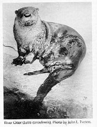 Photograph of the River Otter
