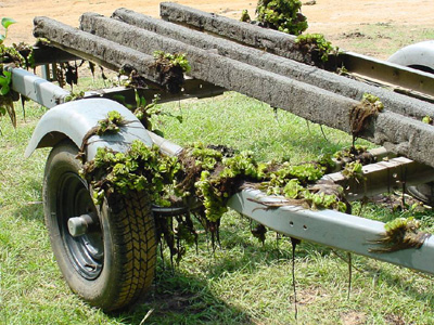 Giant salvinia clings to boat trailer