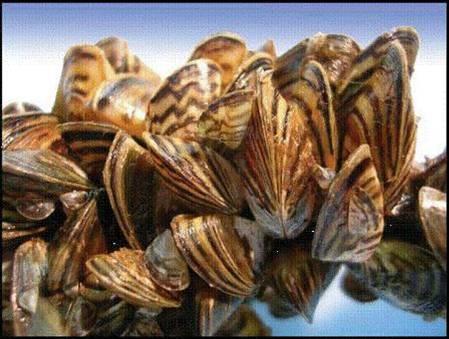 Exotic Fish, Sfish and Invasive Aquatic Plants on