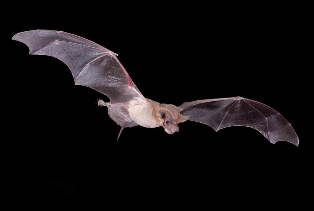 bat watching sites of texas