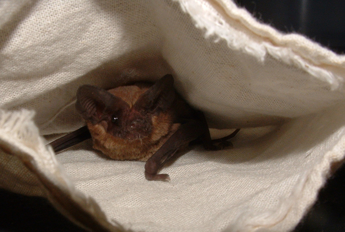 bat watching sites of texas