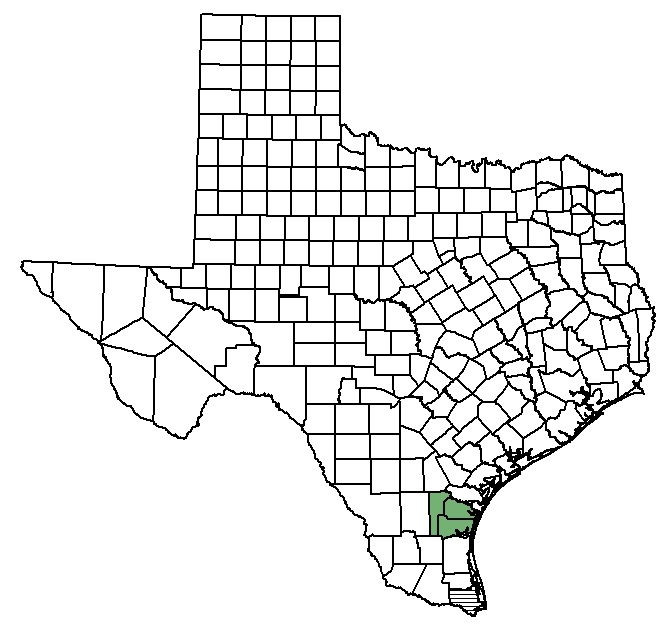 South texas ambrosia federal state listed plants of texas for Texas non game fish