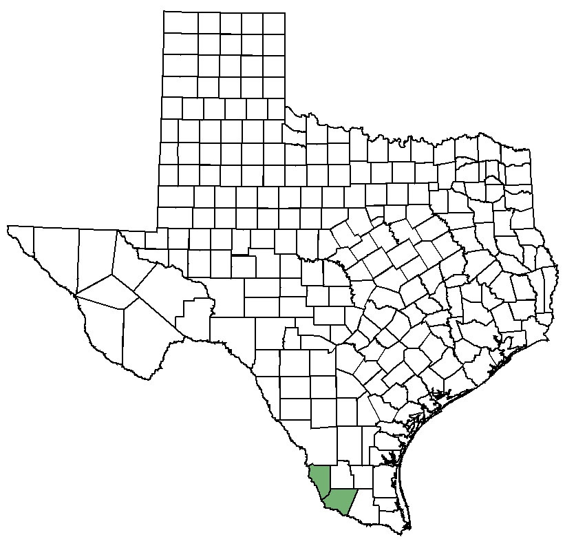 Map Of Zapata Tx.Zapata Bladderpod Federal State Listed Plants Of Texas