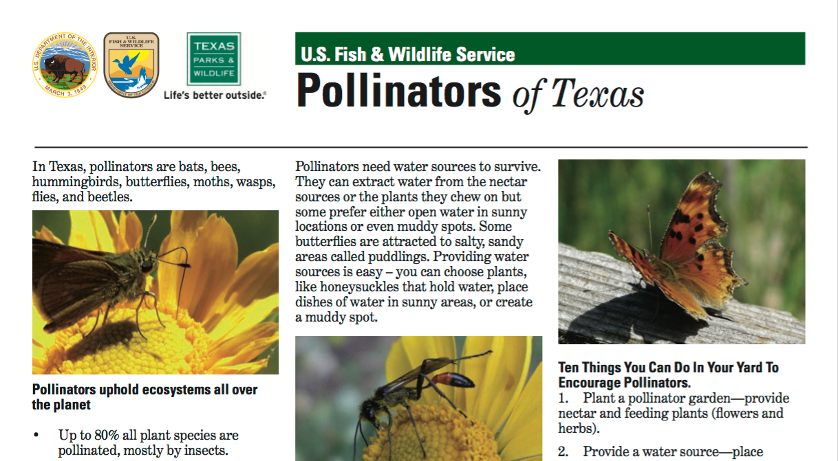 Pollinators Of Texas Fact Sheet