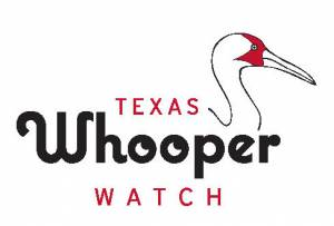 Texas Whooper Watch