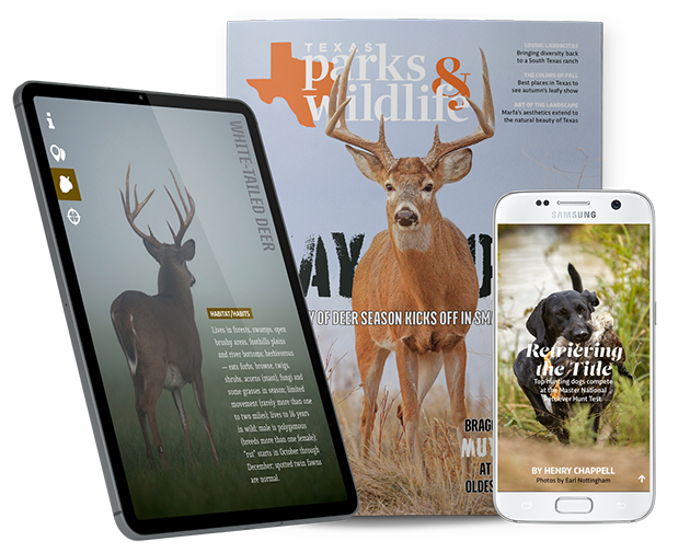 Magazine in print and digital formats