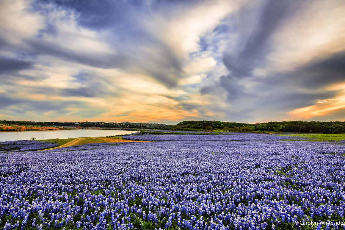 Wildflowers in Highland Lakes
