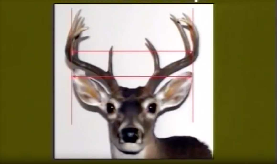You Can Judge a Buck by Its Antlers