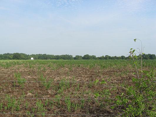 example row crops.jpg