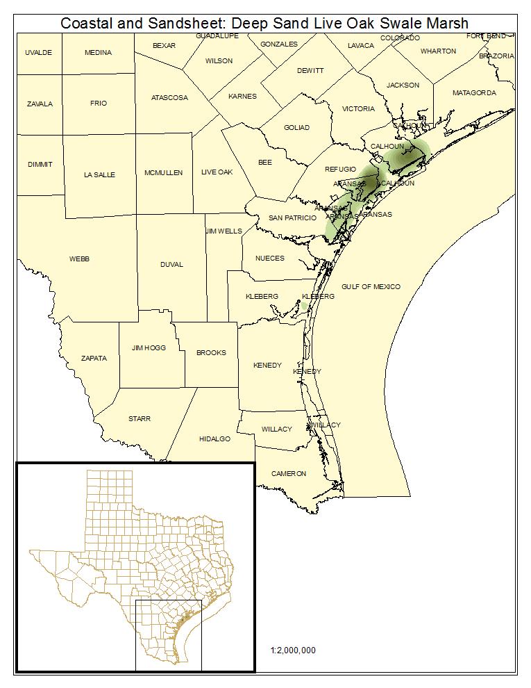 Coastal and Sandsheet: Deep Sand Live Oak Swale Marsh