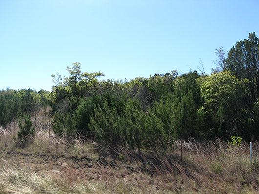 crosstimbers_hardwood_redcedar_slopeforest_site187.jpg