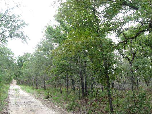 crosstimbers_sandyland_woodland_site5.jpg