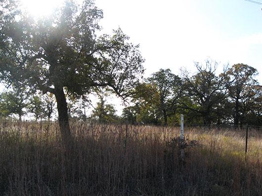 crosstimbers_savanna_grassland_site422.jpg