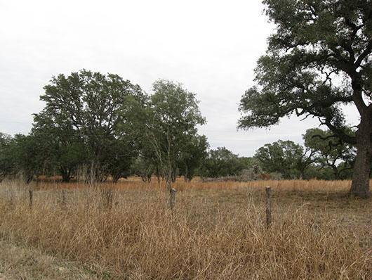 King Ranch Texas >> East-Central Texas Plains Post Oak Savanna and Woodland ...