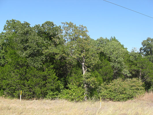 postoaksavanna_oak_juniper_slopeforest_site8122.jpg