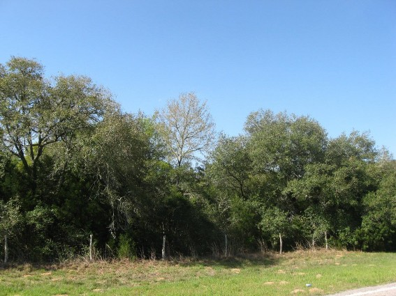Example_Post_Oak_Live_Oak_Motte_and_Woodland.jpg