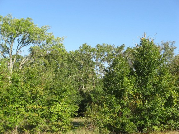 Example_Post_Oak_Yaupon_Motte_and_Woodland.jpg