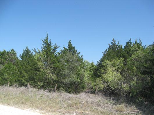 postoaksavanna_redcedar_slopeforest_site8116.jpg