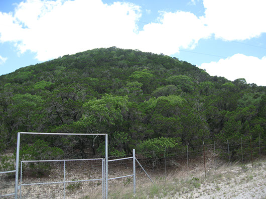 ep_juniper_slopeforest_site2223.jpg