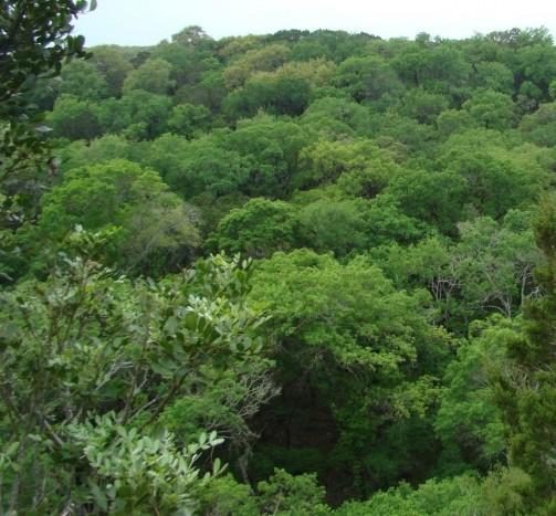 Example_Oak_Hardwood_Slope_Forest.jpg