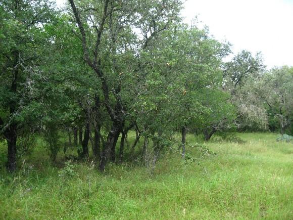 Example_Edwards_Plateau_Oak_Hardwood_Motte_and_Woodland.jpg