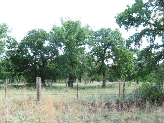 Example_Edwards_Plateau_Post_Oak_Motte_and_Woodland.png